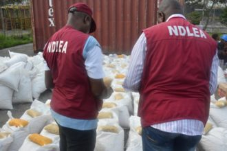 National Drug Law Enforcement Agency (NDLEA)