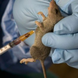Lassa fever: Enugu Govt urges residents to be calm, dispels rumour of nurse death