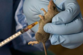 Lassa Fever: Eight persons killed, 40 cases recorded in Plateau