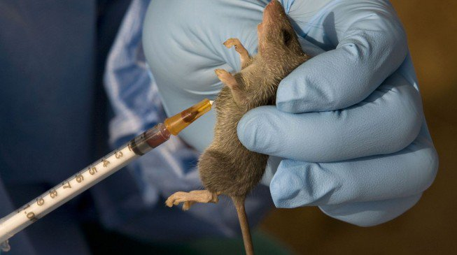 Nigeria lost 101 people to Lassa fever – Doctors without Borders
