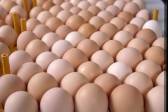 Emefiele, Akeredolu to inaugurate egg powder plant