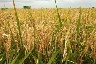 FG okays N60bn subsidy to support rice industry