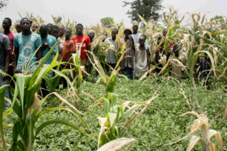 W/Bank to support 10,000 farmers in Kaduna – Official