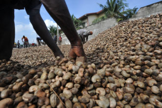 Cashew production to generate 10,000 jobs in Kogi