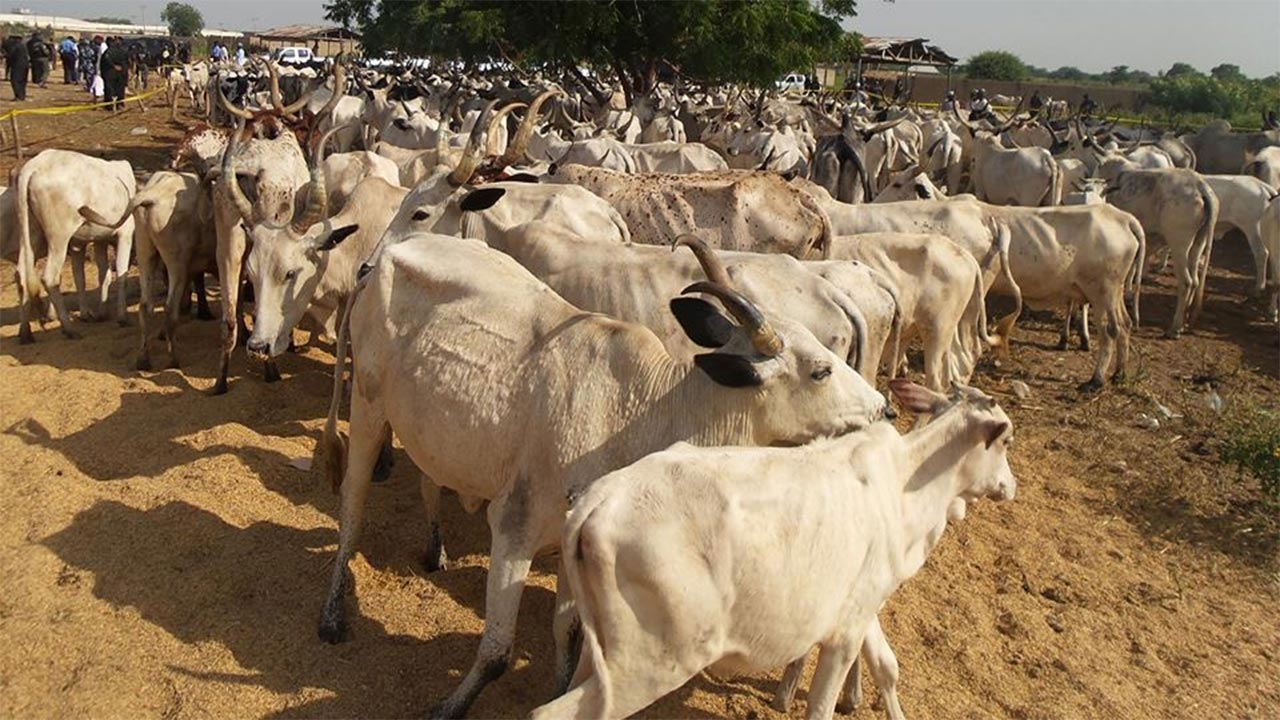 Photo of Troops recover 200 stolen cows in Plateau