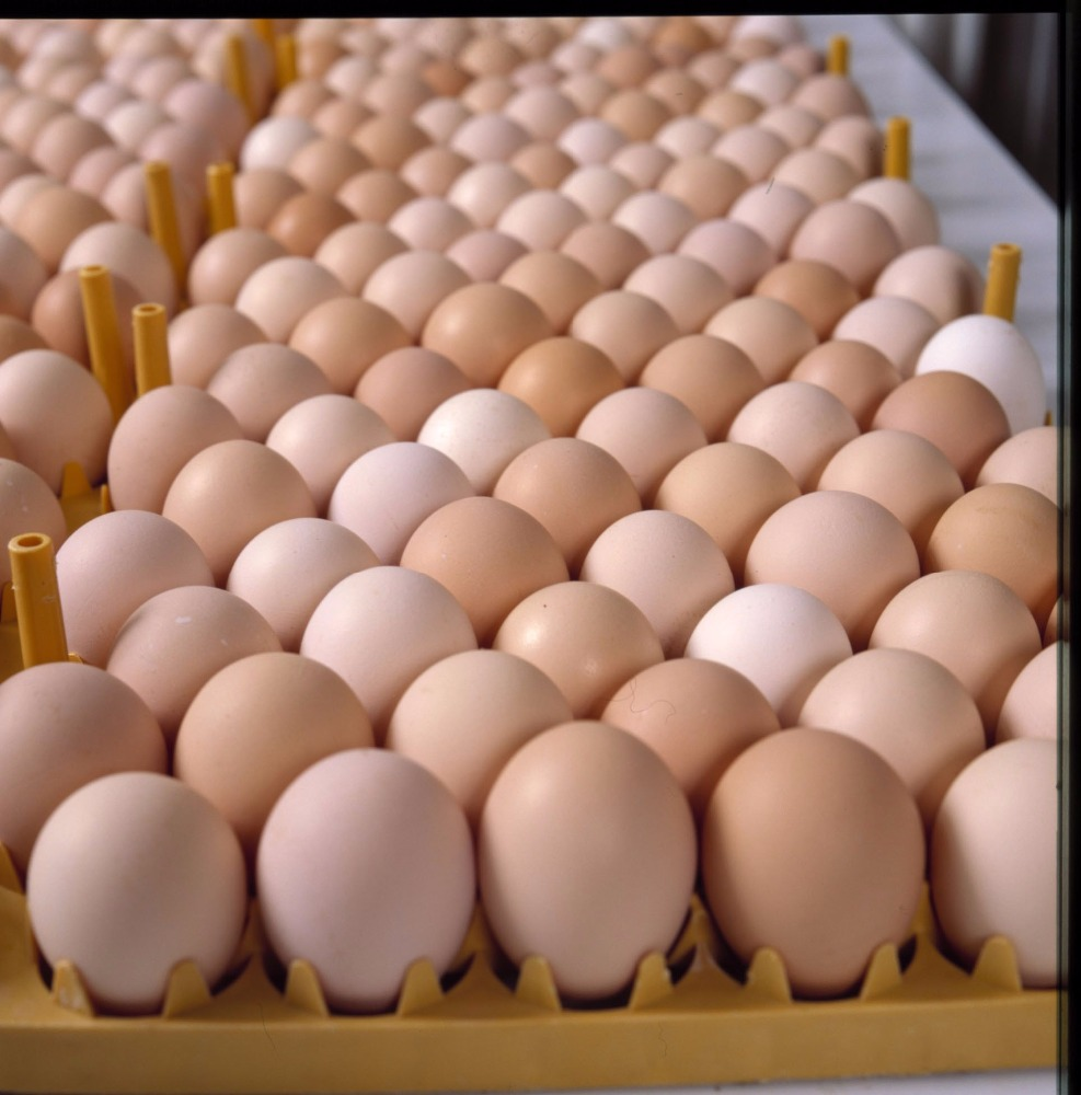 Photo of FG to create 1m jobs through eggs production, processing, sale – Ogbeh