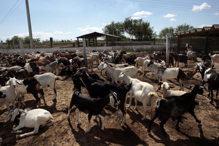 Photo of Sheep farmers urge FG to create ranches for small ruminants
