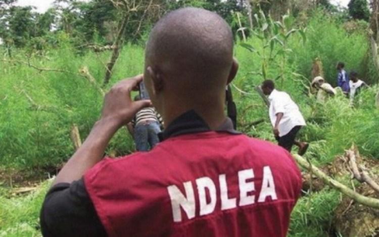 Photo of NDLEA seizes 87.9 grammes of Cocaine in Ekiti