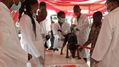 Photo of Lagos to vaccinate 1.5m dogs for free
