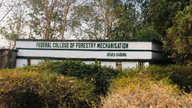 Bandits Free Five More Kaduna Forestry Students