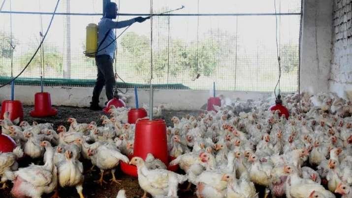 Bird flu hits Kano, Kaduna, Benue, four other states